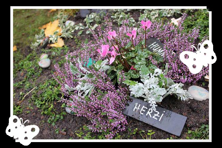 Insektenfriedhof